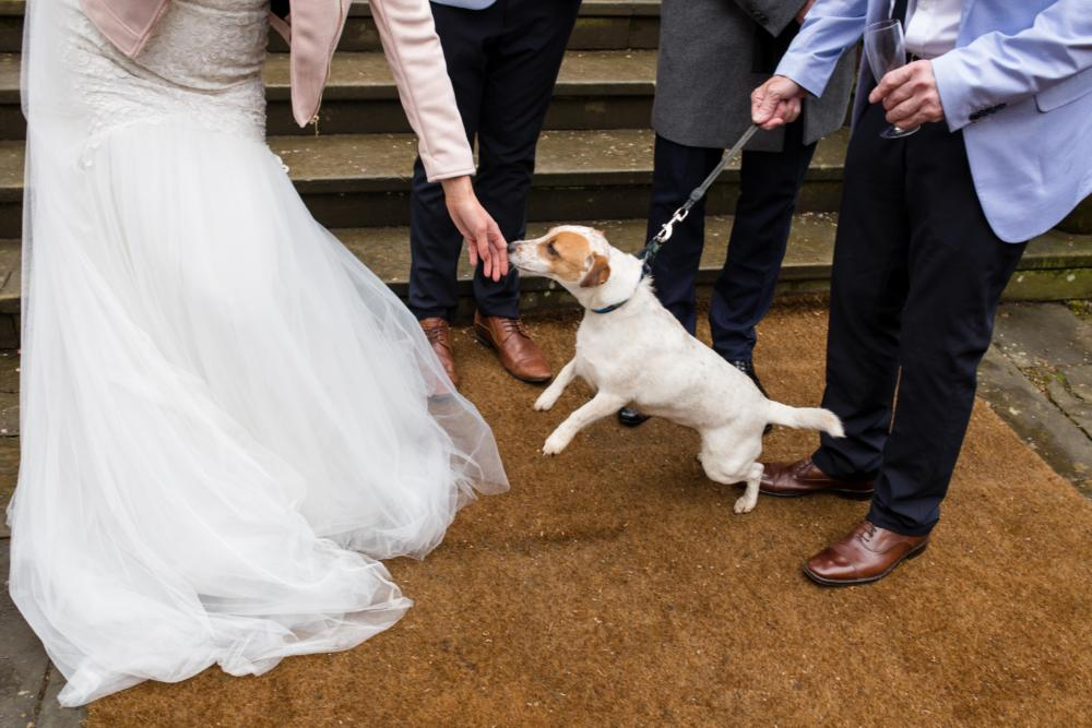 Dog at wedding in between bride and groom feet