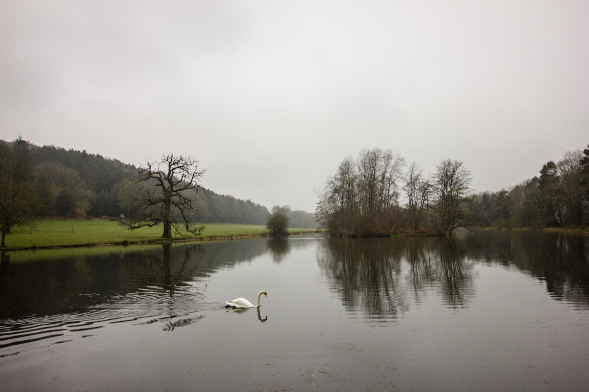 Lone Swan on lake at Walcot Hall Shropshire April Wedding Day